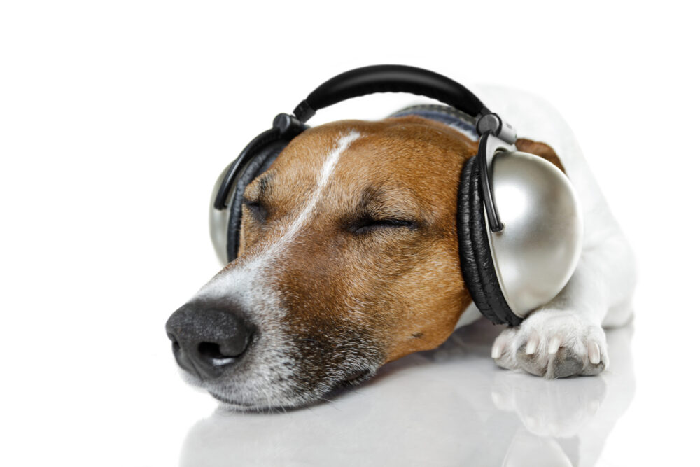 Dog listen to music with a music player