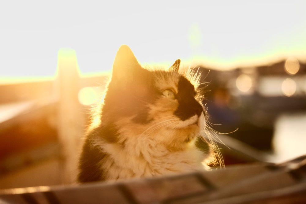 夕日に映える海辺の猫