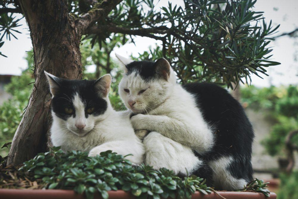 寄り添う2匹の猫の画像