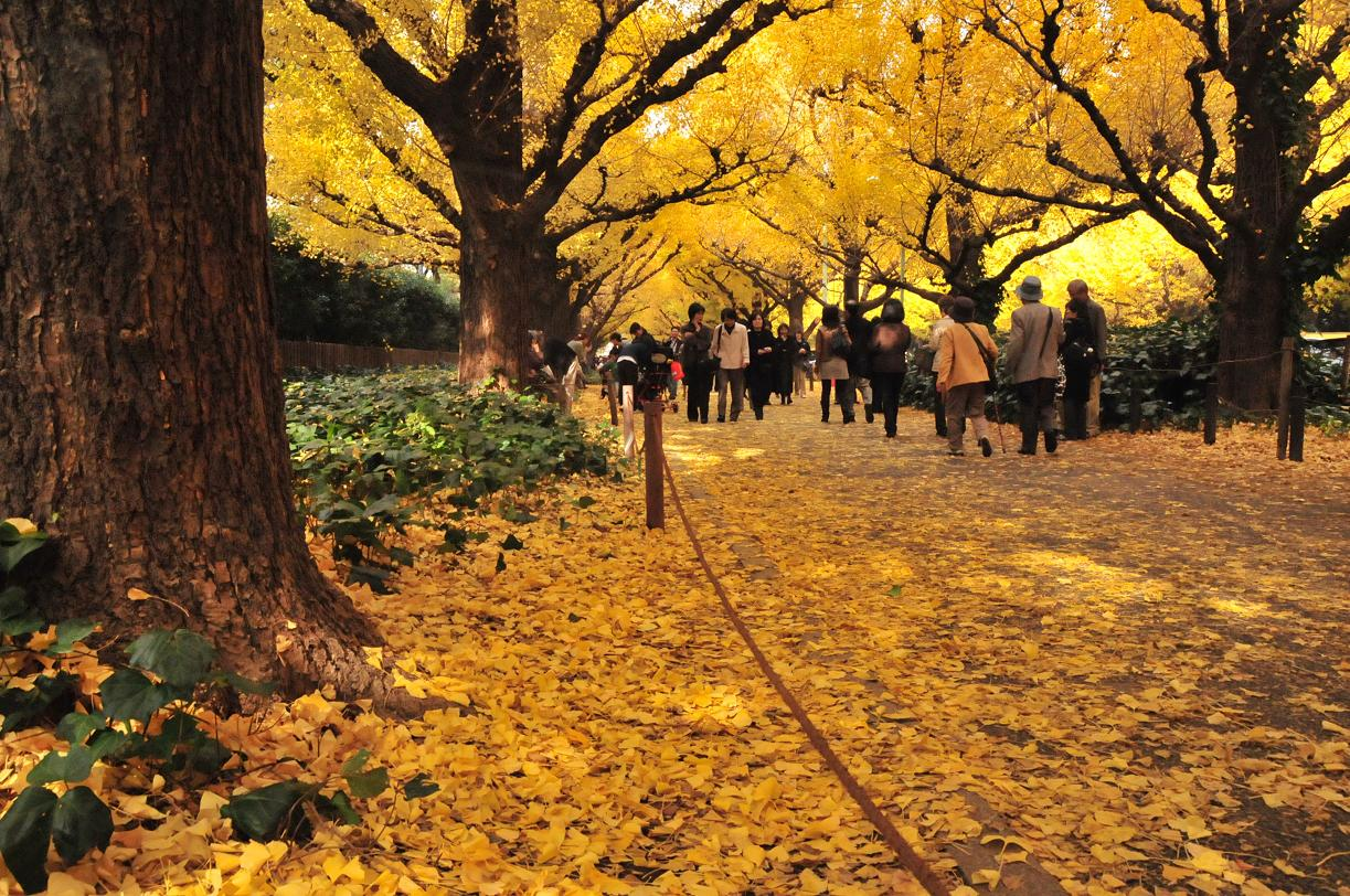 明治神宮外苑 紅葉
