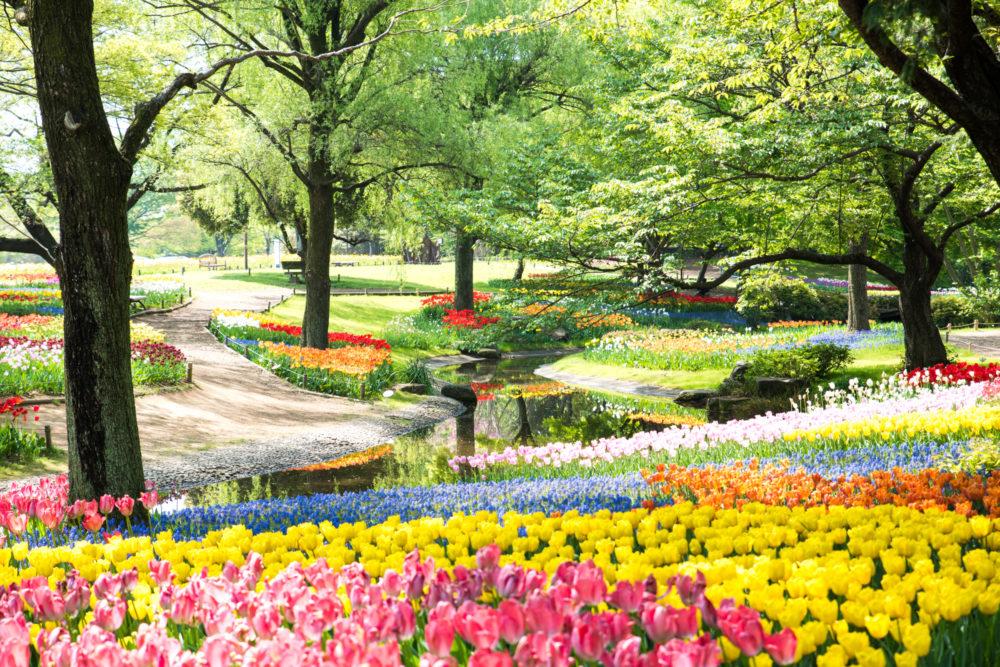 国営昭和記念公園(立川)