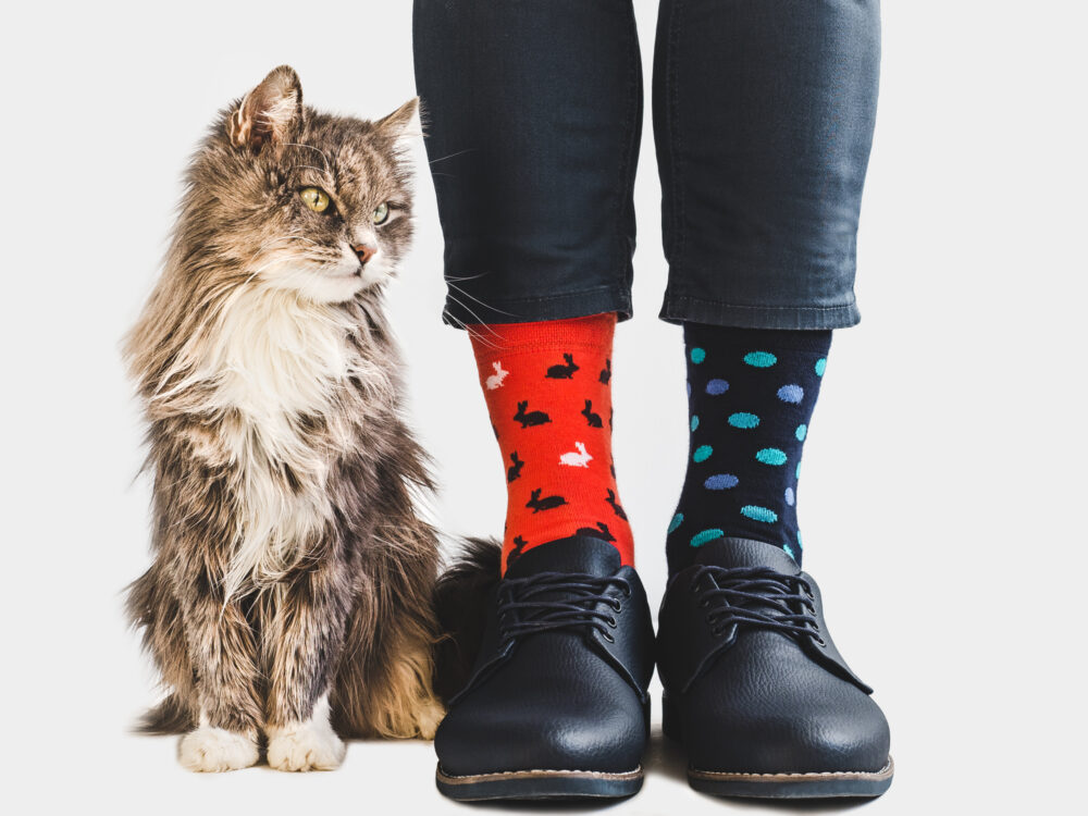 Cute kitten, stylish shoes and bright socks