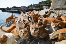 猫好きは絶対必見!休みの日に行きたい全国「猫の楽園」猫島まとめ
