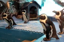 生ペンギンにジャグジーにガンシューティング…都内の変わった居酒屋&飲食店まとめ